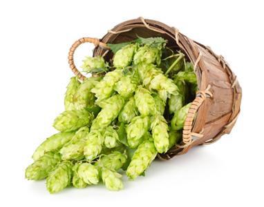 pivovarské kvasnice